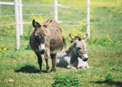 140201020856_donkeys